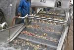 全自动洗菜机,果蔬清洗机多少钱,蔬菜清洗机供应商