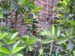 边坡绿化爬藤网生态工程