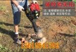 浙江生产起树机起苗器多功能起树球机器