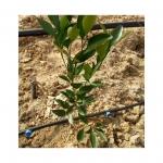 德阳滴灌技术适用哪些果树
