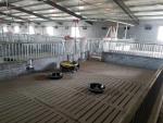 雞舍豬舍自動喂料機上料機 雞棚簡易料線 自動化輸送養殖喂養設