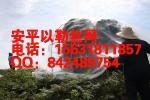 PE聚乙烯防虫网_40目60目防虫网罩_安平防虫网生产厂家