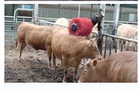畜牧機械用毛刷輥,奶牛清洗用毛刷,全自動牛體刷