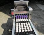 宏光雞蛋鵝蛋咸鴨蛋松花蛋蛋品噴碼機