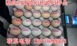 湖南鸡蛋喷码机,小型鸡蛋喷码机,湖南鸡蛋喷码机价格